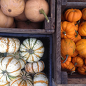 Put a Filter on It: Decorative Gourds