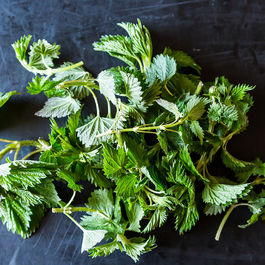 Your Favorite Ways to Use Stinging Nettles