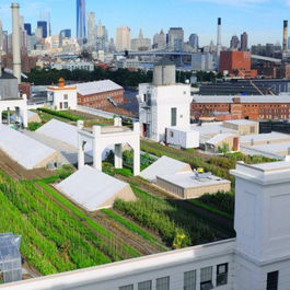 From Babylon to Brooklyn: The History of Rooftop Gardens