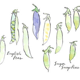 Drawing-peas