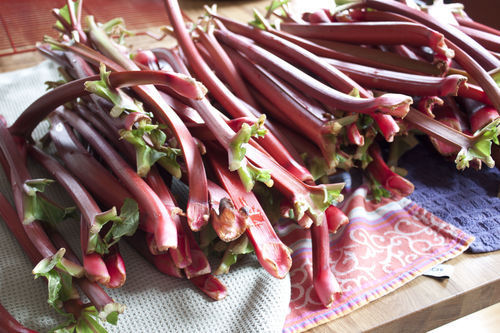 DIY Group Project: Rhubarb Preserves in D.C., Boston and Austin