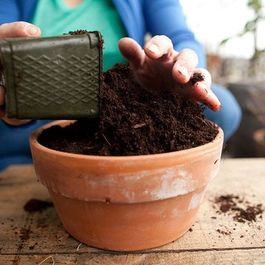A_soil_mix_-_fill_pots_all_the_way