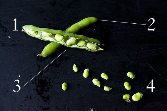 Down & Dirty: Fava Beans