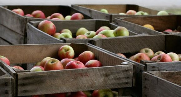 Aw Snaps: Michigan Apples