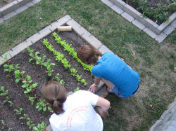 Duke-community-garden_top-view