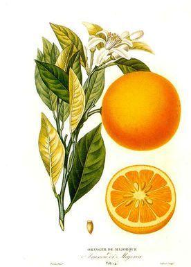 Orange-history-body