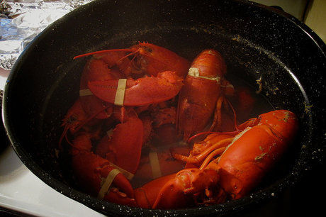 Lobster-steamer-620