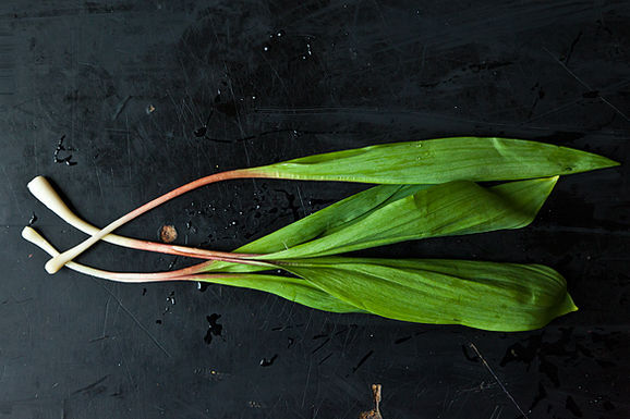 Essays: The Leek Shall Inherit the Earth