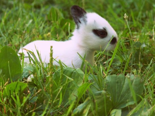 Broken_new_zealand_baby_bunny