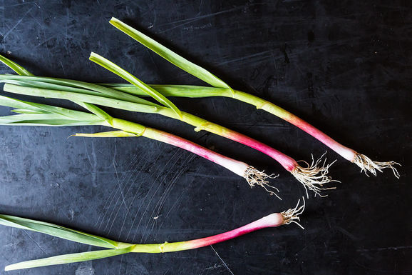 Green Garlic: The Adolescent Allium