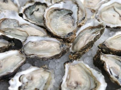 Oysters-on-ice
