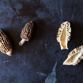 Morels: Perhaps Not Mushrooms, But Still Fungi