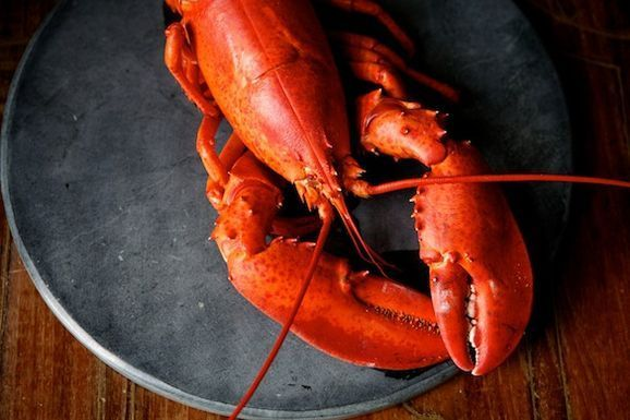 5 Links to Read Before Preparing Shellfish