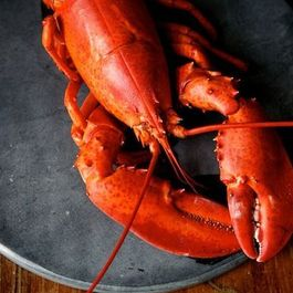 The Humble Lobster