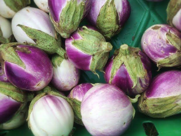 Eggplantgrf