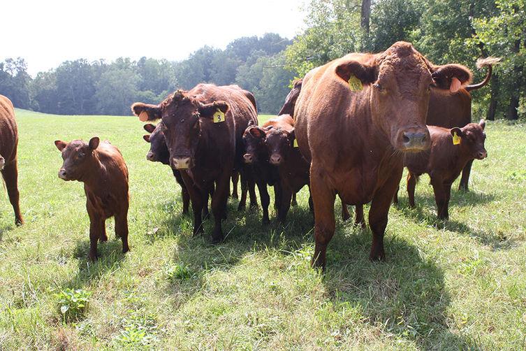 Beef_modern_farmer_