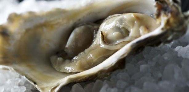 Oysters-large