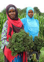 Somali Farmers Find a Home in Maine