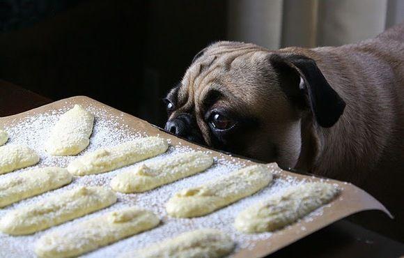 Sprinkle Bakes