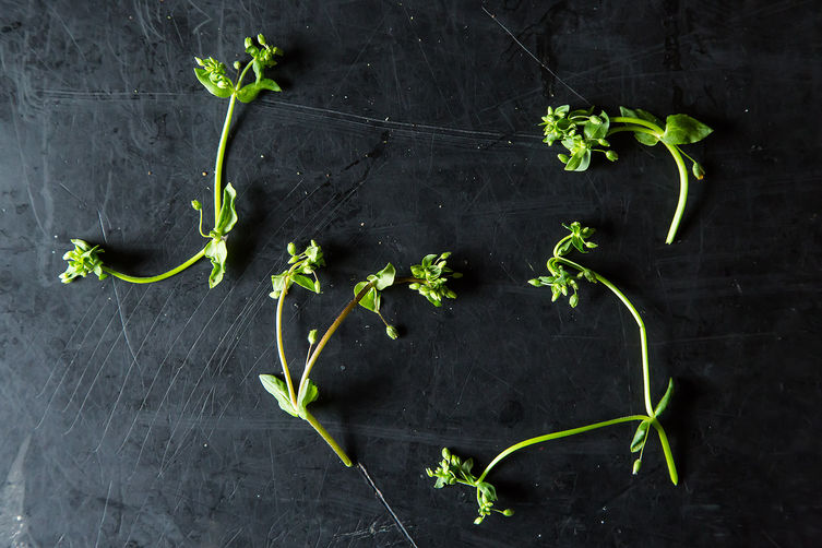 Chickweed and 4 Ways to Use It