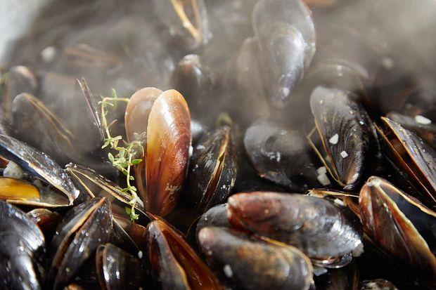 2014-0325_finalist_mussels-dijonnaise-239