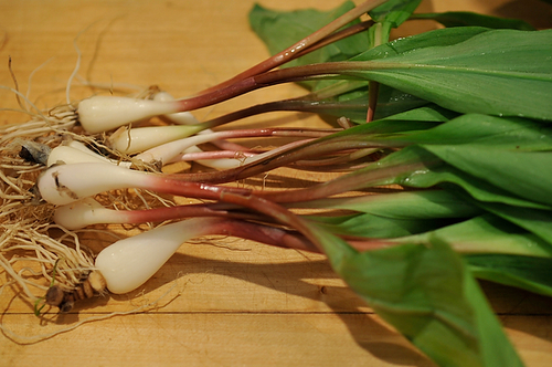 Sweet & Spicy Pickled Ramps Recipe on Food52
