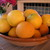 Misc._oranges_and_primavera_tree_008