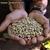 Ni04-62_nicaragua_a_handful_of_organic_coffee_beans_jalapa