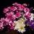 Blooming250