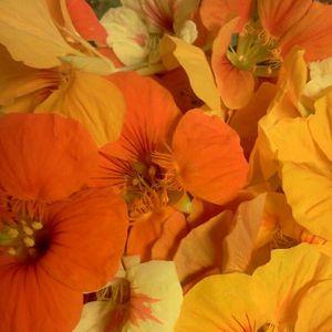 clementinebakes