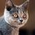 Pipie_avatar